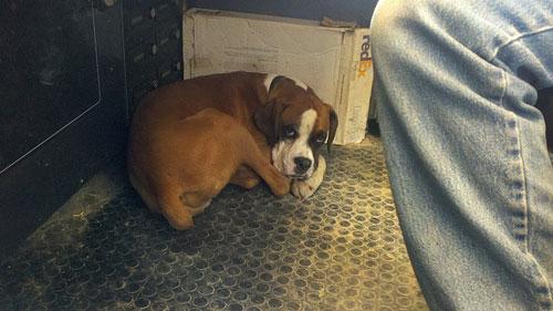 Tiny-the-dog